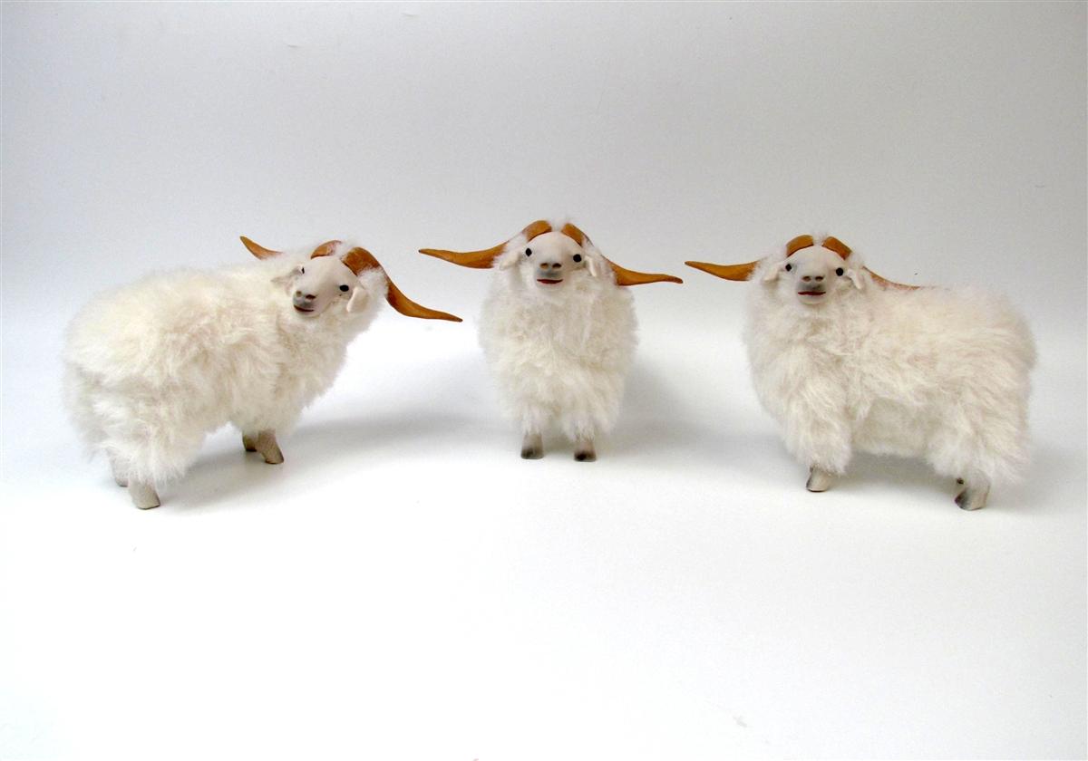 Baby cashmere goat - photo#7