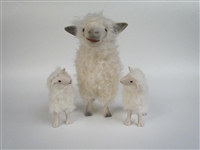 Cotswold Ewe With Cute Curious Medium Twins