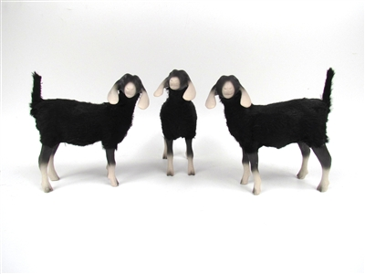 Nubian Black and White Goats