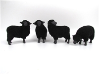 Black Sheep Flock