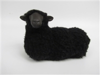 Black Sheep Lying