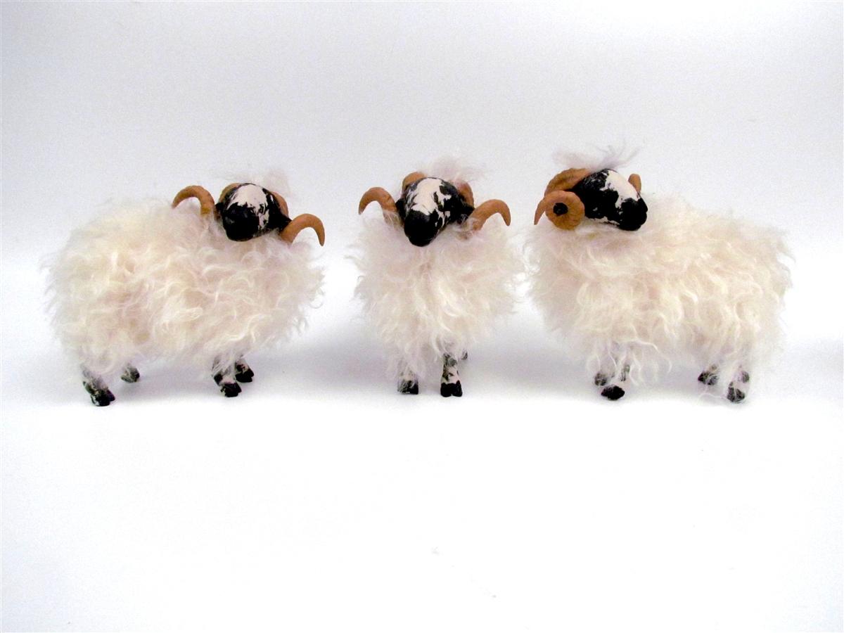 Scottish Blackface Rams