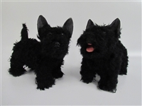 Scottie Puppy Standing
