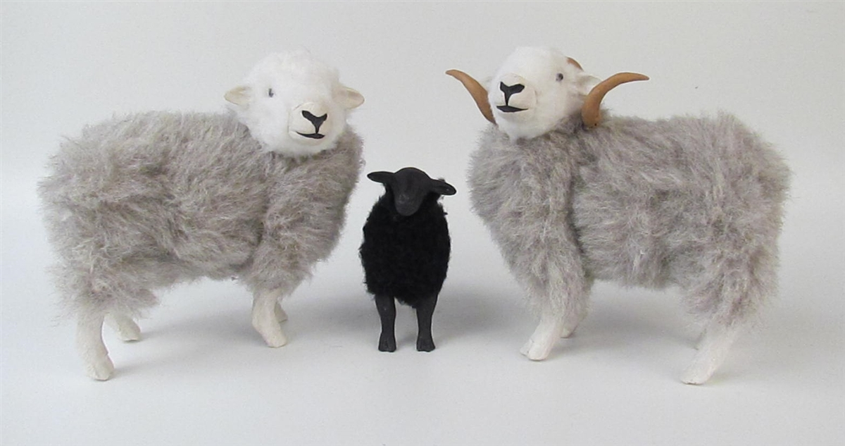 Herdwick Sheep Family