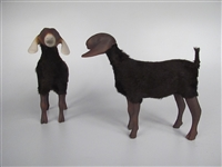 Nubian Brown Goats