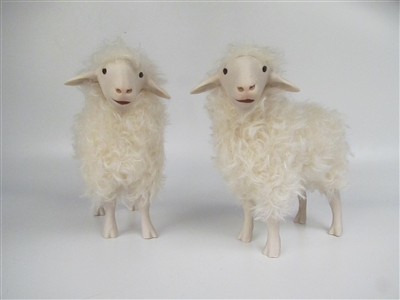 Alpine Steinschaf Sheep