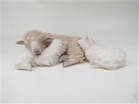 Colin's Creatures Handmade Mother's Day Sheep,  Romney Ewe Lying Cheek to Cheek With Standing Lamb